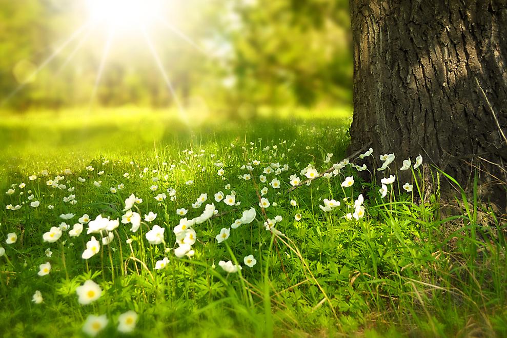 Las liściasty z bogatym runem leśnym stanowi idealne miejsce na pasiekę. W takim miejscu pszczoły zazwyczaj mają pożytek cały sezon.