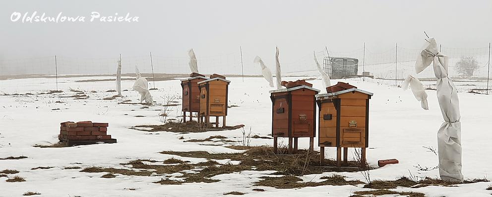 Luty w Oldskulowej Pasiece był bardzo zmienny jeżeli chodzi o pogodę. Były mrozy, wiatry, śnieżyce, padał deszcz i kilka dni prawie wiosennych,