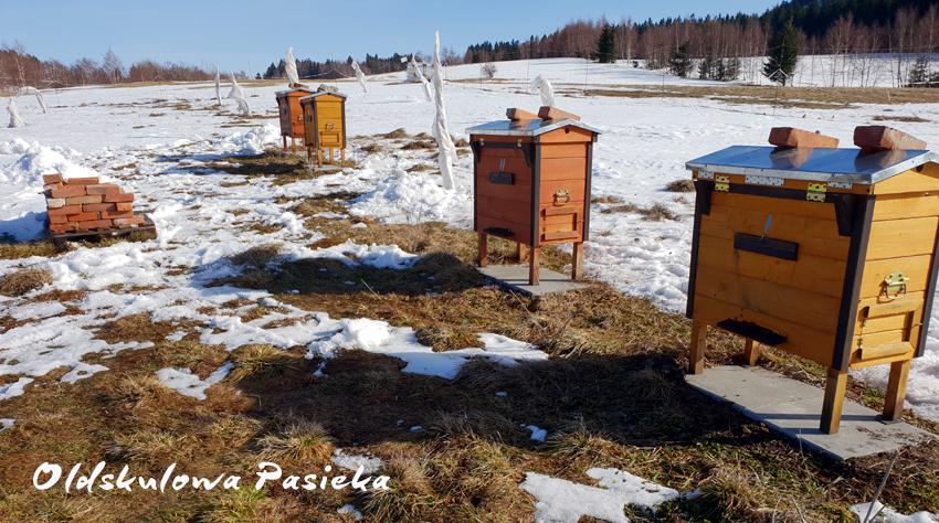 Słoma rozrzucona przed ulami albo odgarnięty śnieg sprawia, że w czasie oblotu pszczoły które sobie siądą na ziemi nie będą krzepły z zimna i nie będą ginąć.