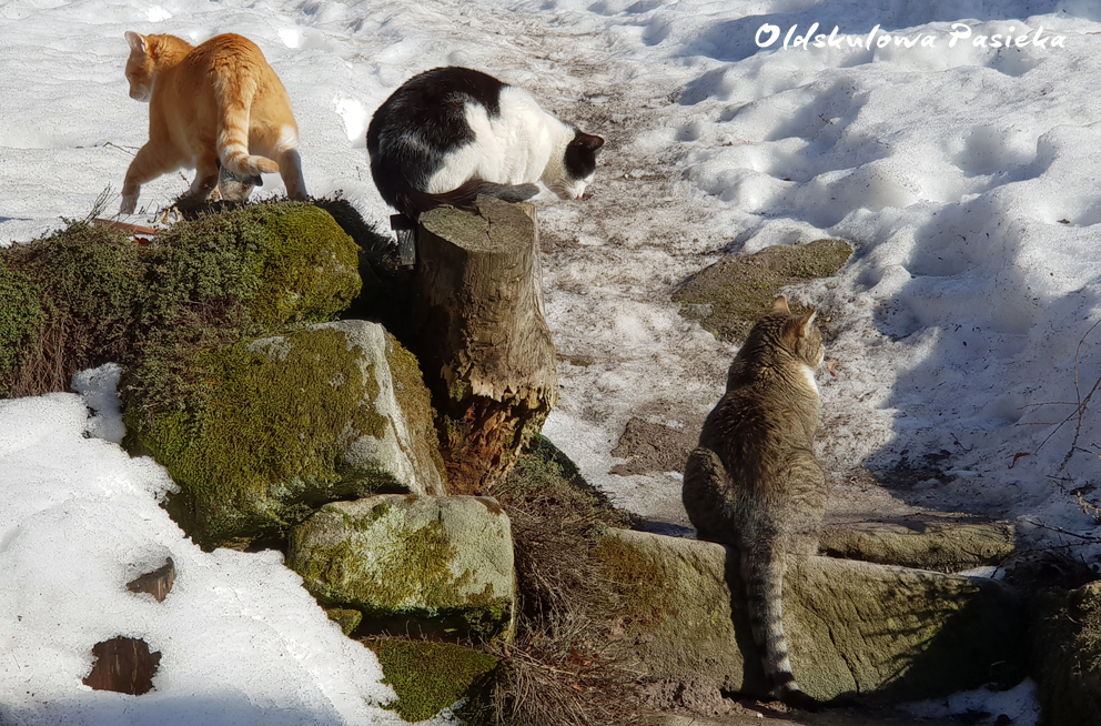 Wszyscy w Oldskulowej Pasiece czekają niecierpliwie na ciepło. I kiedy słońce zaczyna przygrzewać pomimo mrozy - wszyscy korzystają z promieni słońca.