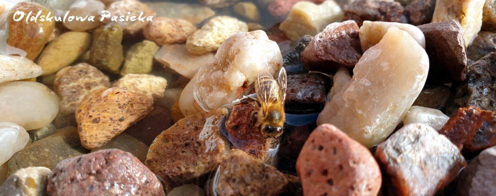 Woda wiosną i na przedwiośniu jest bardzo ważna. Dlatego należy ustawić w osłoniętym miejscu poidło z wodą najlepiej ciepłą, skąd pszczoły będą ją sobie spokojnie pobierać.