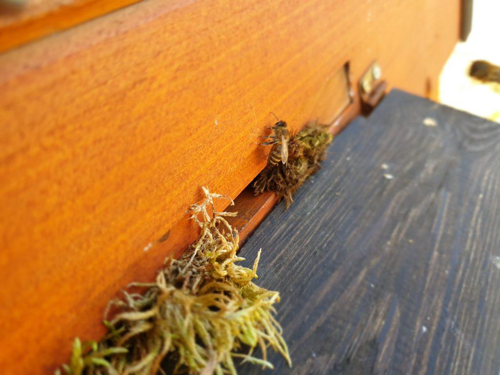 Pierwszy oblot pszczół w Oldskulowej Pasiece. Pszczoły pojedynczo zaczęły wychodzić z ula.