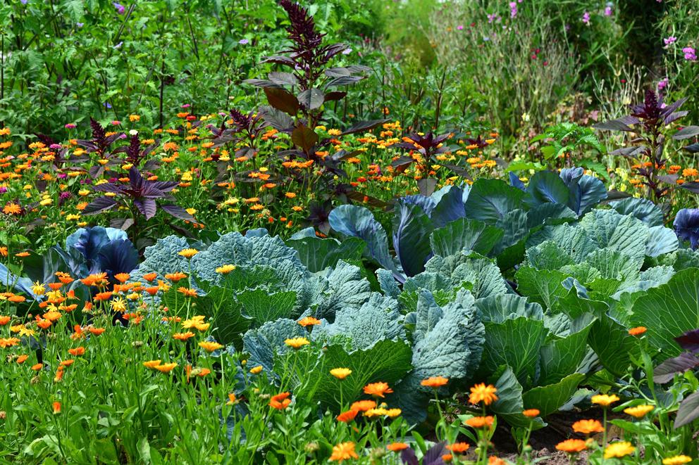 Przydomowy ogród uprawiany metoda współrzędna jest świetną bazą pożytkową dla pszczół.