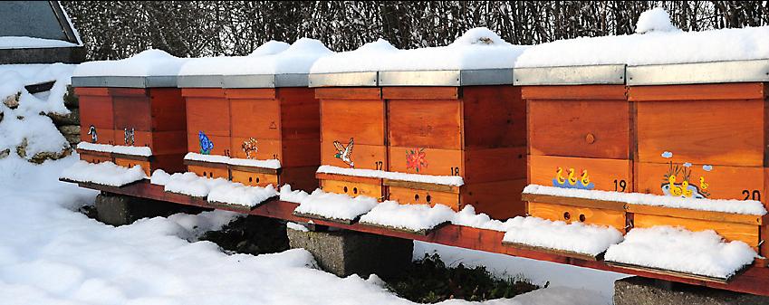 Podczas zimowli pszczoły potrzebują na pasieczysku przede wszystkim spokoju. W Oldskulowej Pasiece nie zaglądamy wtedy do uli, nie chodzimy koło nich.