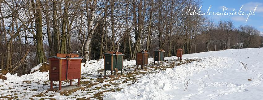 Drewniane ule warszawskie zwykłe stojące w szeregu na odśnieżonej łące