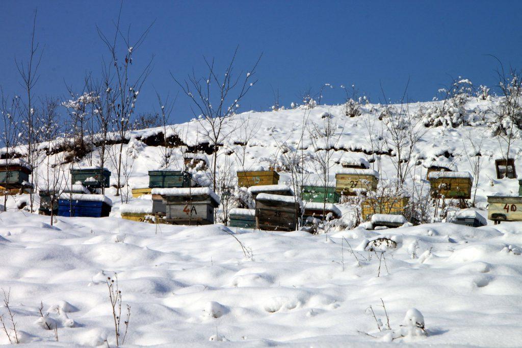 Widok na pasiekę usytuowaną na stoku przykryta śniegiem. Na pasieczysku stare, drewniane ule.