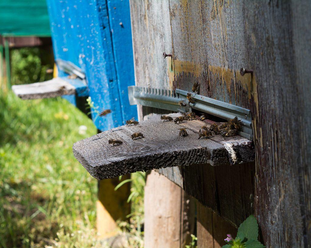 Zbliżenie na wylotek ula. Drewno już stare i lekko spróchniałe.