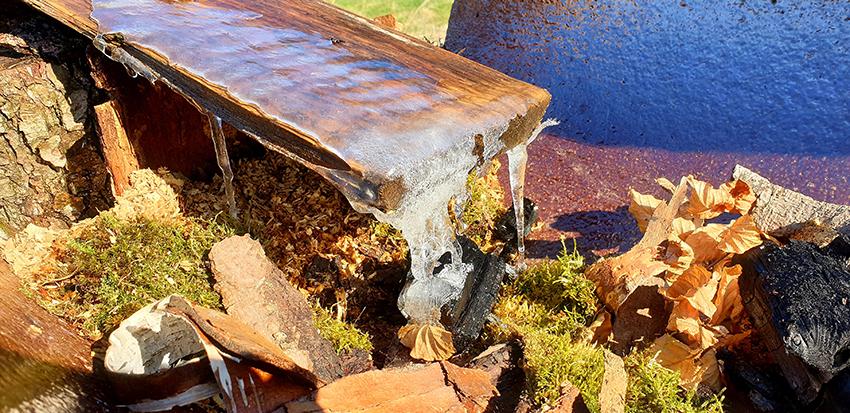 Zamarznięta woda na deseczce poidła w Oldskulowej Pasiece.