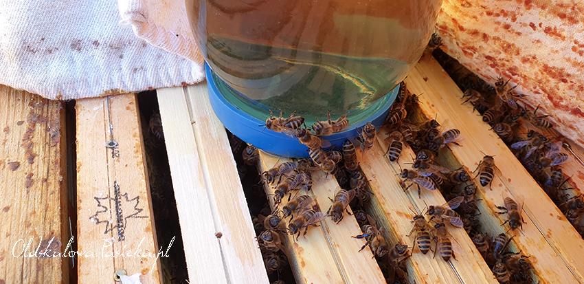 ramki w ulu z chodzącymi po nich pszczołami i słoik z syropem