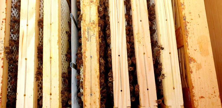 ramki pszczelae widziane z góry. Od prawej: mata słomiana, 4 ramki, krata odgrodowa i pozostałe ramki z widocznymi pszczołami